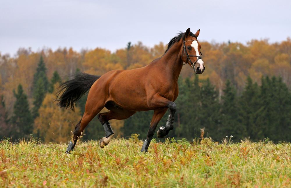 Ting du burde vite før du kjøper en hest