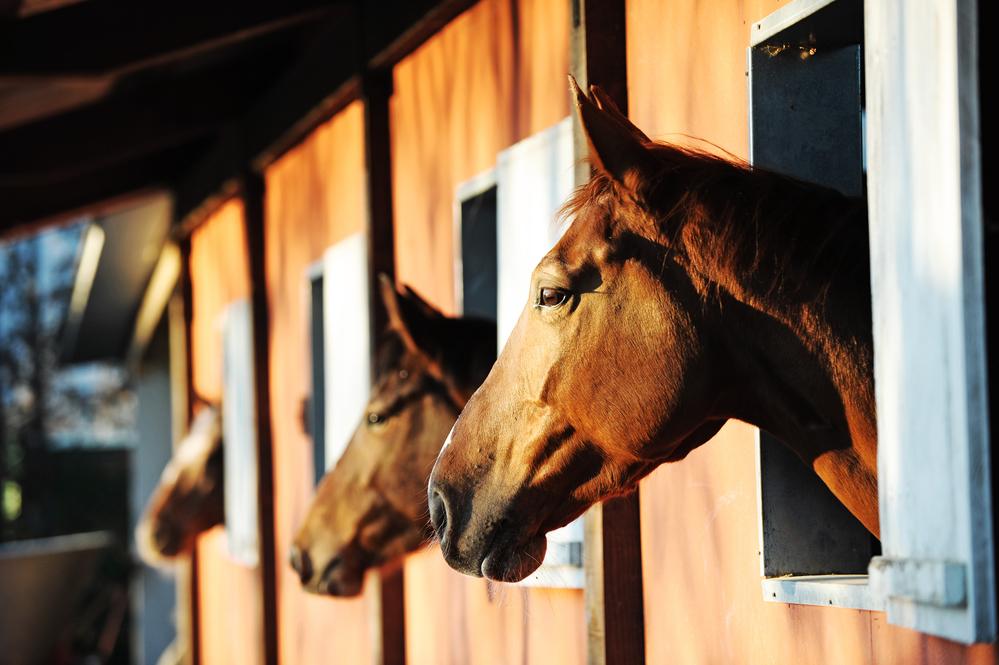 Jobbe med hester i utlandet